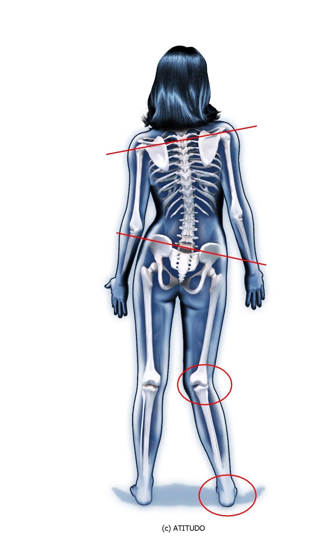Atemberaubend Fuß Skelett System Galerie - Menschliche Anatomie ...